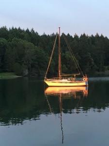 Sandpiper bathed in sunset Annette Bay